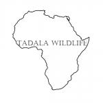 Tadala Wildlife